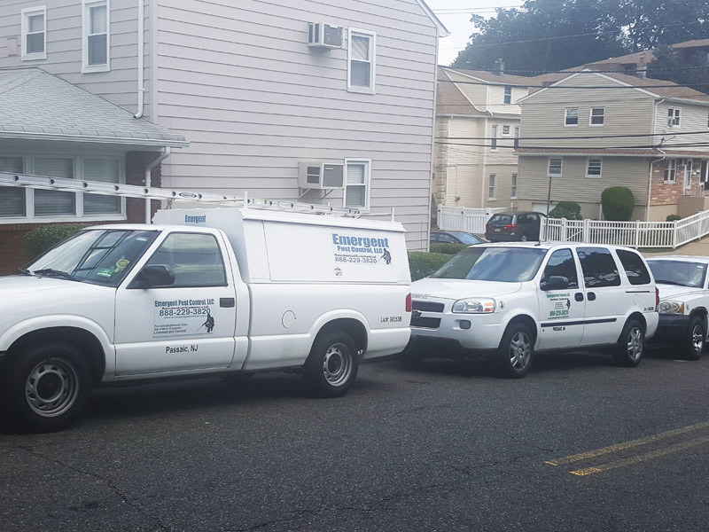 Jersey City - Emergent Pest Control, LLC gallery